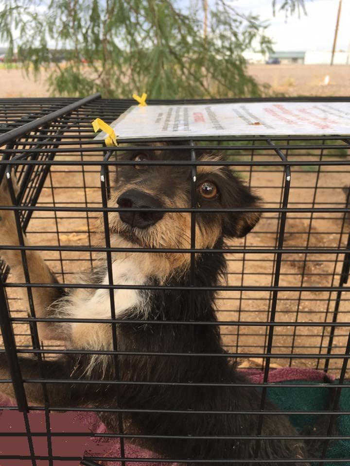 Humane Trapping Workshop | HARTT
