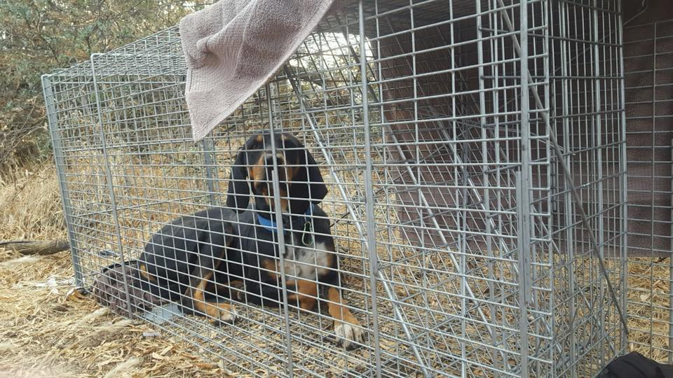 Humane Capture and Technical Rescue | HARTT